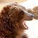 Medvěd řádí dál. Na Kroměřížsku zabil dvě ovce a zničil včelín