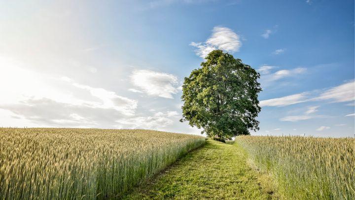 Toto jsou nejkrásnější stromy letošního roku. Který se vám nejvíc líbí?