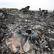 Civilní letadlo nad Ukrajinou zasáhla raketa odpálená z území proruských rebelů, potvrdili experti