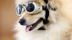 online seznamka pro psy