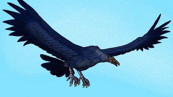 Velké a dlouhé ptáky