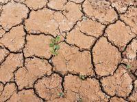 Česká krajina jako středomořská oblast. Sucho je horší než dříve, čeští zemědělci mají problém