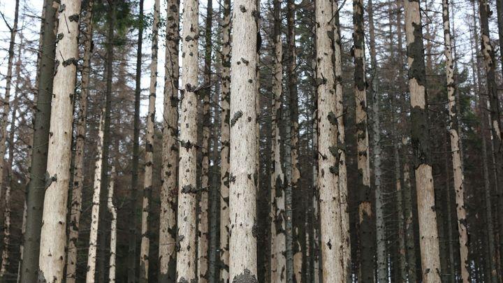 Nárůstem CO2 by mohla za 50 let ubýt desetina hmoty dřevin, tvrdí čeští vědci