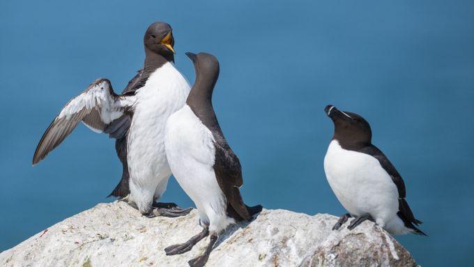 Vědci zjistili, co zabilo až milion ptáků. Oceán zasáhla nezvykle teplá vlna
