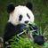 Velké stěhování v pražské zoo. Přesunovat se budou lední medvědi i gorily, očekává se příjezd pandy