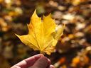 Létu odzvonilo. Podle astronomů začíná podzim, dny se budou krátit