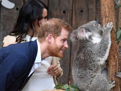 Těhotná Meghan a Harry pobláznili Austrálii. Pro královské dítě dostávají první dárky