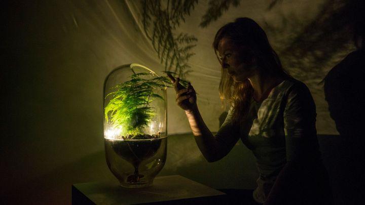 Lampička, která nepotřebuje zásuvku, ale rostlinu. Zelená technologie by mohla rozsvítit celá města