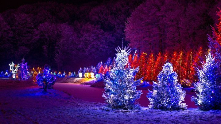 Vánoční stromky zdražovat nemusí. Kvalitních je dostatek