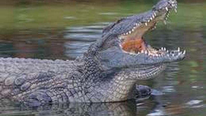 Krokodýlí farma na Znojemsku končí, o maso prý nebyl zájem