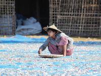 V Číně je nedostatek žen. Muži si je nakupují od překupníků z Barmy, vyjdou levněji