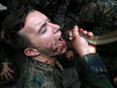 Foto: Přežili byste v džungli? Vojáci na extrémním kurzu přežití pijí kobří krev a jedí tarantule