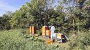 Na loukách nedaleko Prahy naleznete včelínů přehršel.