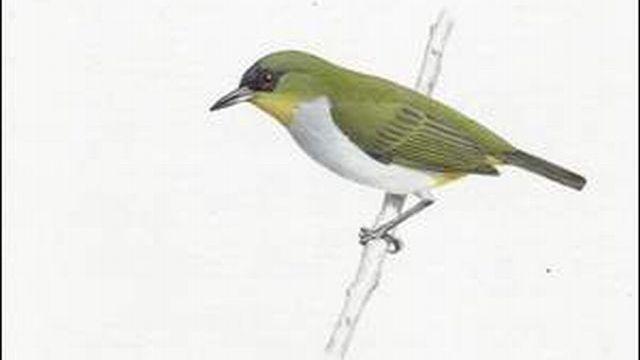 bílé ptáky obrázky