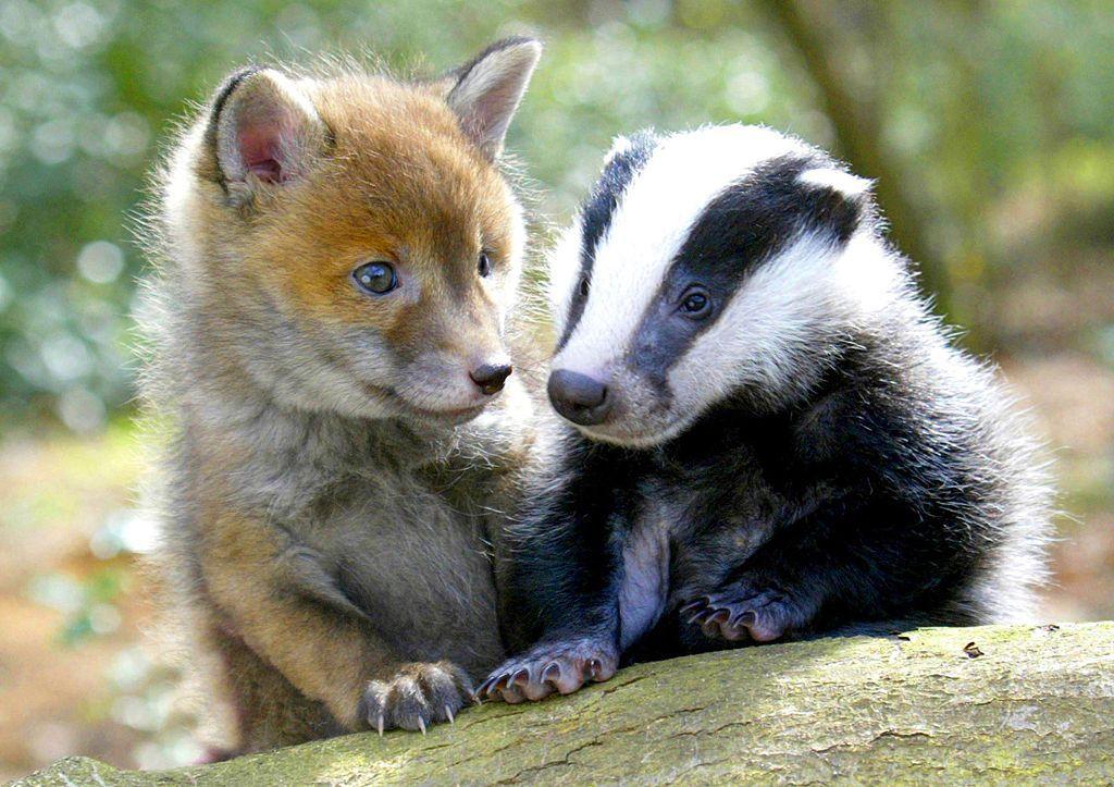Fotogalerie: Zvířecí přátelství