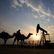 Kuvajt: OPEC bude jednat o prodloužení nebo ukončení dohody, zásoby ropy v USA se rapidně snižují