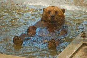 072f46d812f Na kostře uhynulého medvěda Vojty se budou učit pražští vysokoškoláci