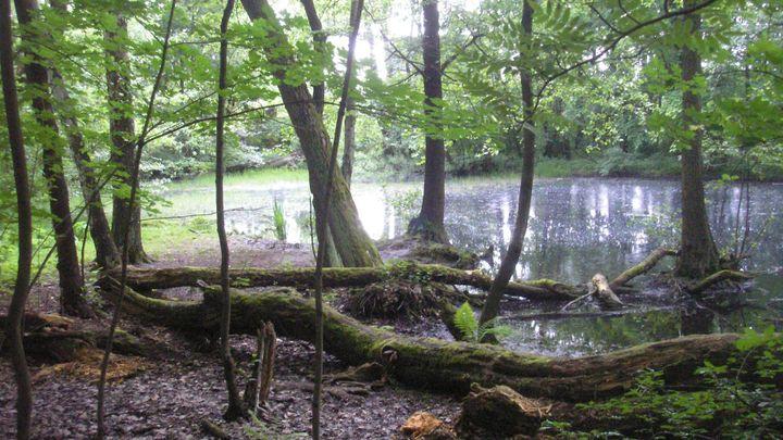 Foto: Mokřady fungují jako houba. Zachrání člověka od sucha i od záplav, přesto se jich zbavuje