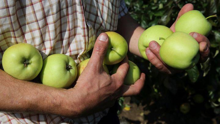 Vinou nadúrody v Evropě klesla cena průmyslových jablek