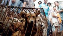 Zabíjet psy pro maso je ilegální, rozhodl jihokorejský soud. Aktivisté věří v úplný zákaz psího masa