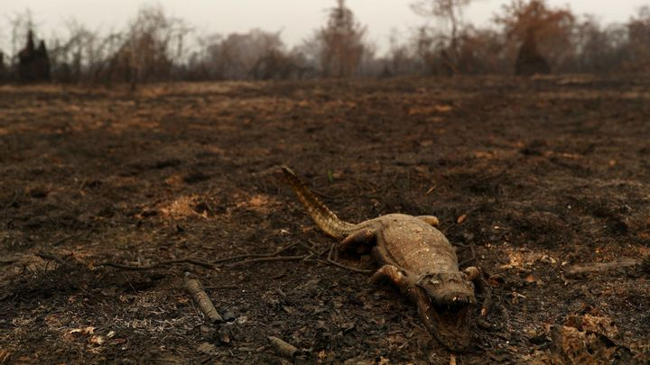 Foto: Na zemi leží sežehlí hadi i opice. V Brazílii hoří největší mokřad světa