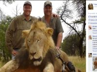 Zimbabwe žádá o vydání Američana, který zastřelil lva Cecila