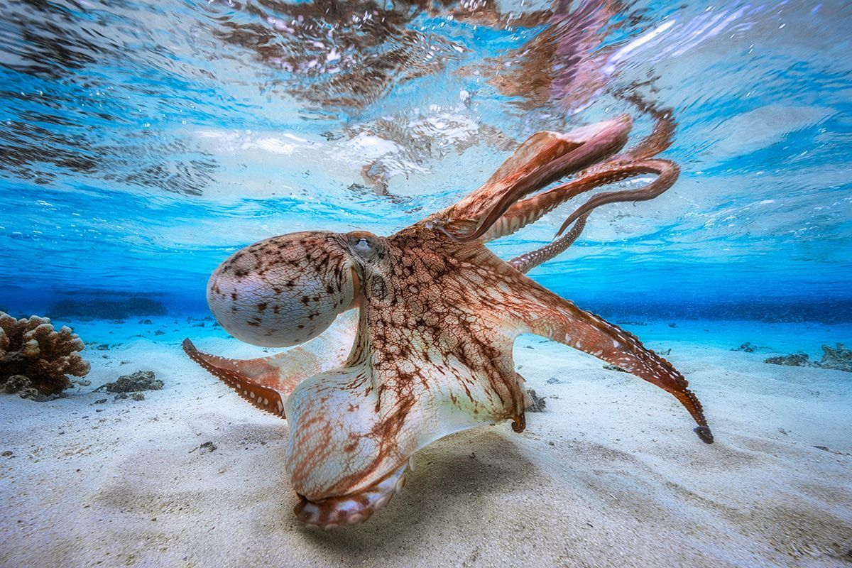 Underwater Photographer of the Year 2017: Vítězové soutěže
