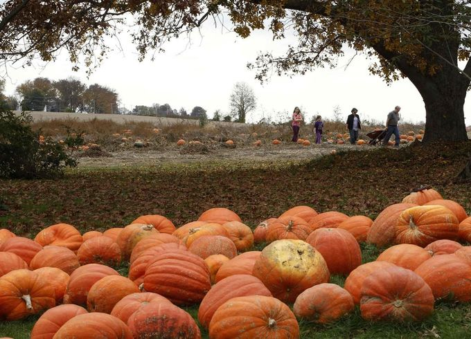 A family returns from the fields with their Halloween pumpkin choices at Mayne's Tree Farm in Buckeystown, Maryland October 27, 2012. Halloween is four days away. REUTERS/Gary Cameron (UNITED STATES - Tags: SOCIETY) Published: Říj. 27, 2012, 8:52 odp.